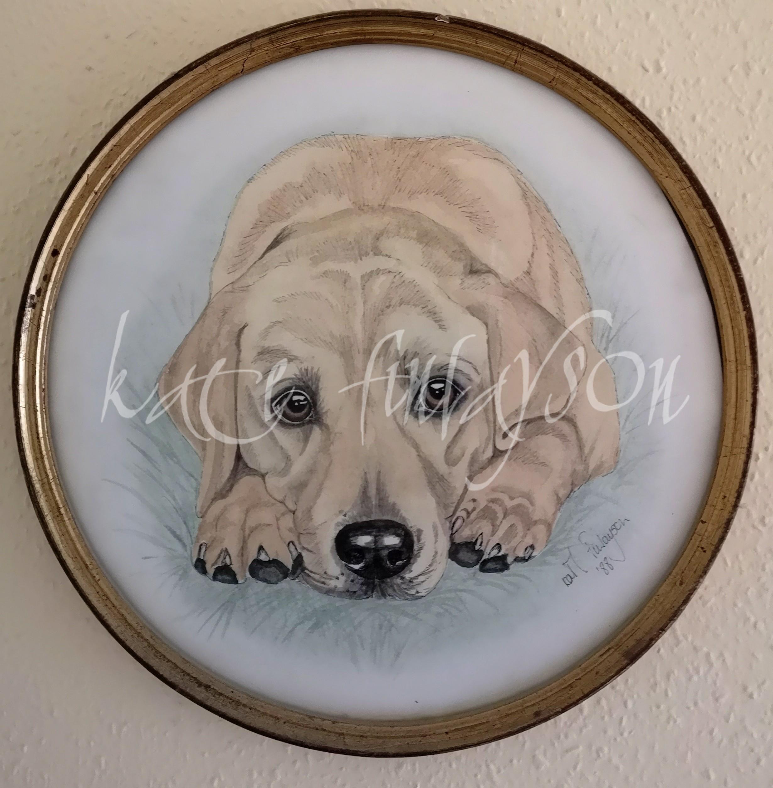 Labrador Somerset Animal Portrait Wilshire